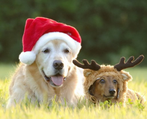 Funny Christmas Dogs Photo Wallpaper